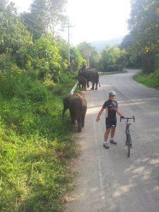 Wow! Elephants!