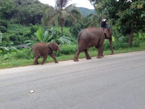 Elephants at Antenna